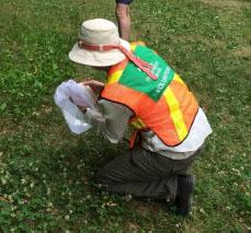 Volunteer surveyor catching a bee!