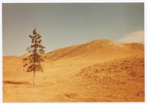 Waverly Ranch tree 1983 Theo Mitchell