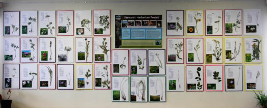 You can still help with the Herbarium Project