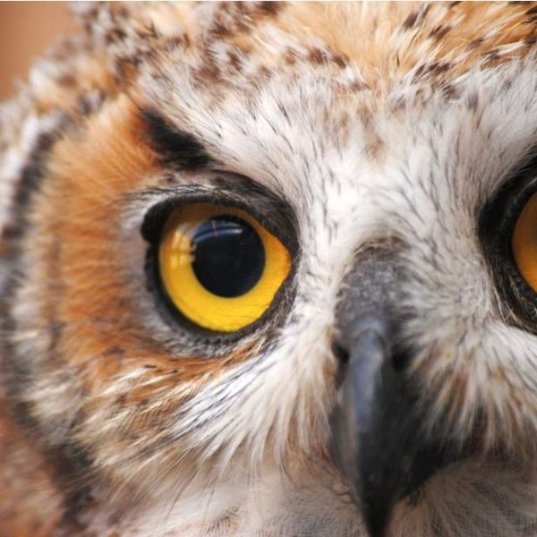 Park Talk: Wildlife Rehabilitation