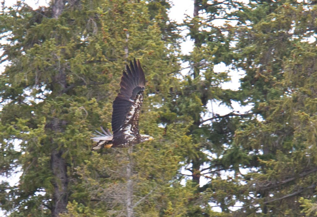 Park Talk: Eagle Watch