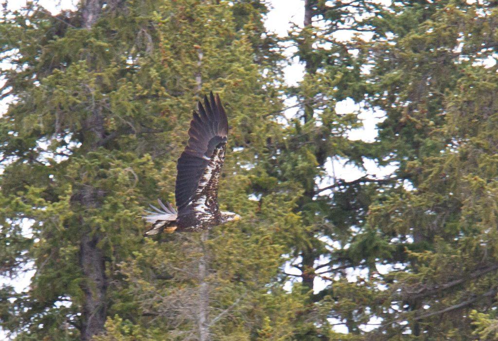 Park Talk: Eagle Watch